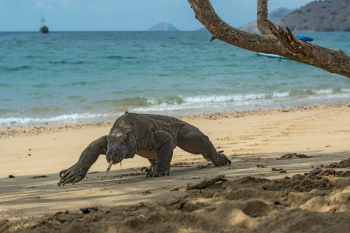 A União Internacional para a Conservação da Natureza (IUCN, na sigla em inglês) afirmou que, apesar da melhoria global na preservação das espécies, o número de animais que estão em alto risco continua a crescer