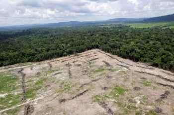Especialistas alertam que o bioma pode registrar um colapso ainda nesta década se o desmatamento e a ocupação do território não forem freados
