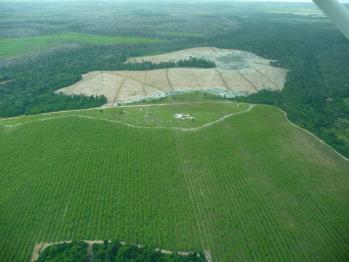 Foram desflorestados 14.502 hectares entre 2018 e 2019, crescimento de 27,2% na comparação com o período anterior (2017-2018)