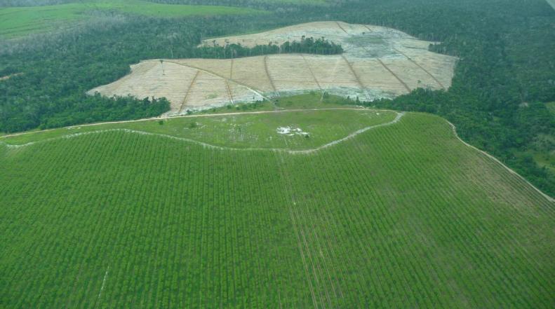 Desmatamento na Mata Atlântica, no Sudeste do Brasil