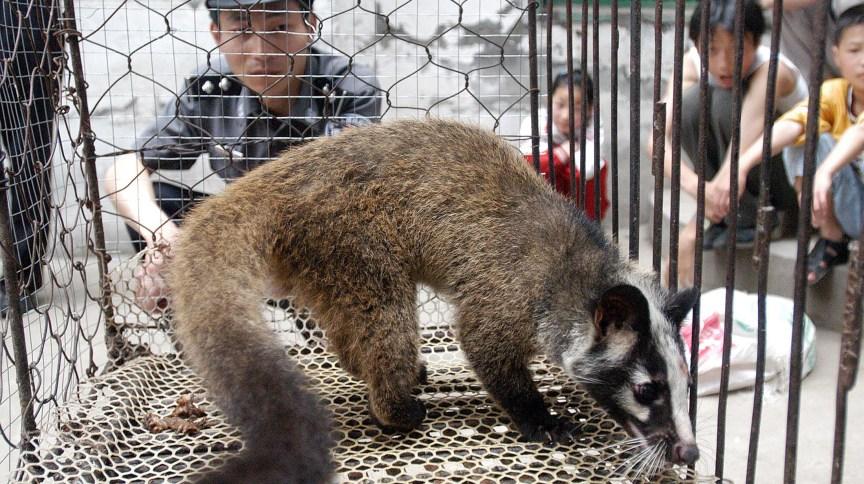 Policial observa civeta selvagem capturada por fazendeiro em Wuhan, na China