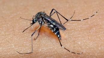 Relação sexual como transmissora do vírus também poderia explicar o motivo pelo qual a doença se espalhou rapidamente