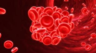 Ilustração mostra coágulos em vasos sanguíneos