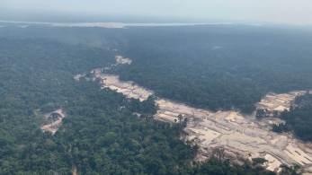 Região que compreende maior desmatamento está no Pará, com 61% da área devastada