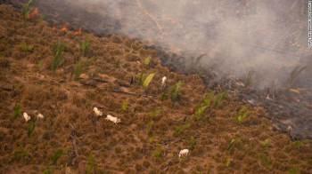 Sem mediação do governo federal, governadores buscam financiamento de projetos de desenvolvimento sustentável em regiões da floresta