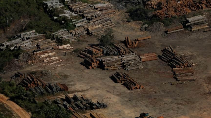 Área de extração de madeira na região de Apuí (AM)