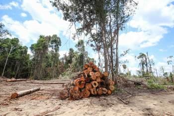 """""""O carbono neutro é a nova linguagem da economia, é uma mudança importante o Brasil não tem acompanhado"""", disse Jorge Caldeira"""