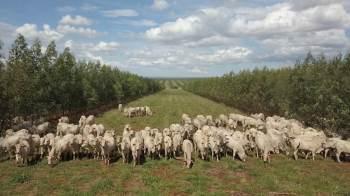 O texto propõe o aumento do controle sobre a importação de produtos como o cacau e carne bovina, entre outros