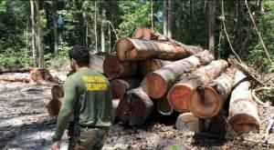 Temendo boicote, empresários cobram compromisso do governo contra desmatamento