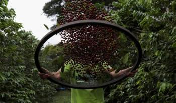 Segundo a pasta, o CMN reservou 20% do valor das linhas de custeio, comercialização, capital de giro e financiamento para aquisição de café