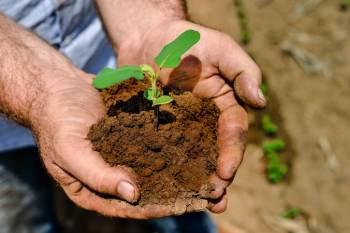Com a parceria, pequeno agricultor já planeja expandir a produção