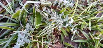 Segundo o Simepar, cidades registraram geadas e queda de temperaturas devido a uma massa de ar frio e seco que atinge a região