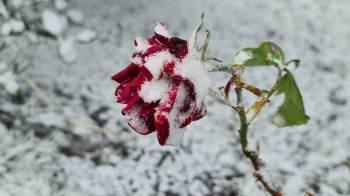 O Vale do Cruzeiro amanheceu coberto de neve nesta quarta-feira (30); temperaturas na região chegaram -2ºC