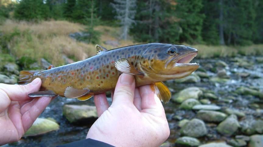 Peixes são sensíveis aos efeitos adversos de muitas drogas neurologicamente ativas