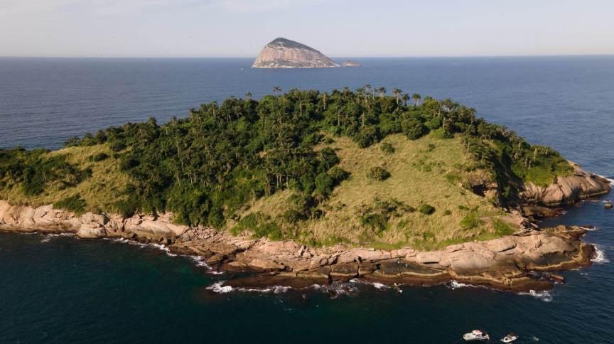 Experimento pioneiro no país, o projeto também servirá como piloto para o reflorestamento de outras ilhas brasileiras