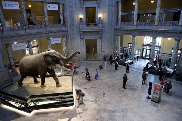 Museu Nacional de História Natural Smithsonian, em Washington