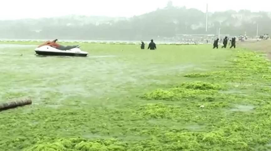 Infestação de algas é recorde em cidade de Qingdao, na China