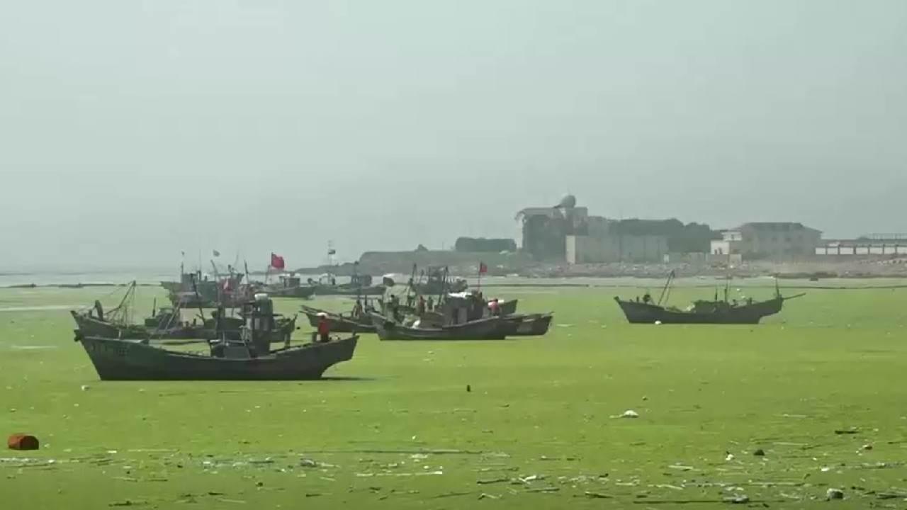 Barcos em cidade de Qingdao, na China, que sofre com infestação de algas