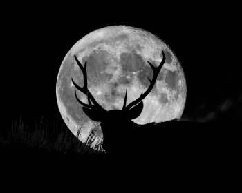 Fase mais brilhante da lua poderá ser vista pelos próximos três dias