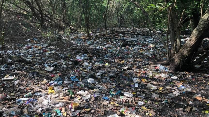 Manguezais do Canal do Fundão degradados pelo aporte permanente de lixo