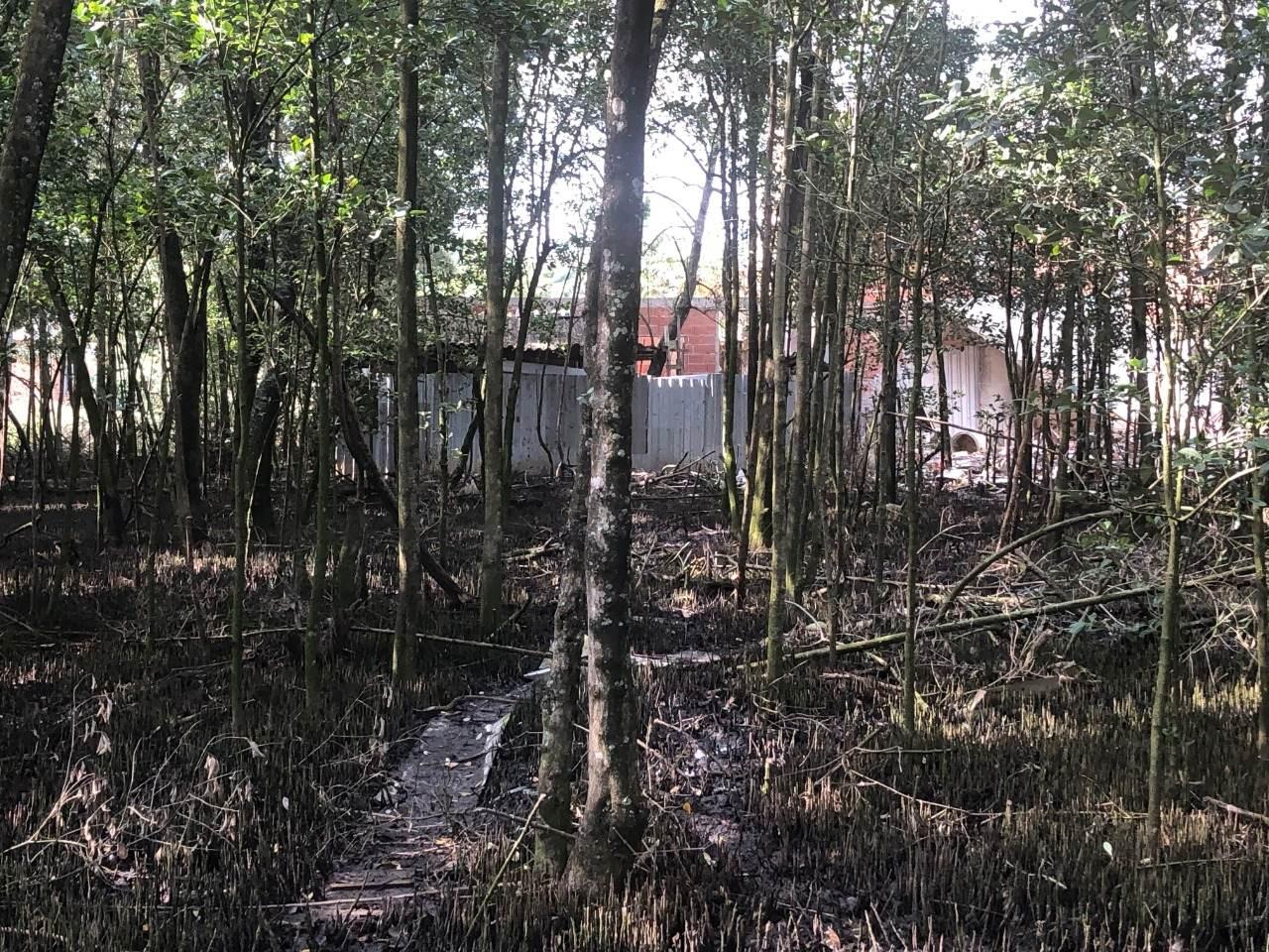 Manguezais de Guaratiba, ocupados pelo crescimento urbano desordenado.