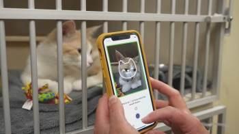 Ferramenta desenvolvida por startup canadense usa câmera do celular para analisar movimentos sutis dos felinos