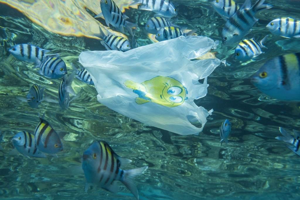 Sacola plástica flutua em meio a cardume de peixes no mar do Egito