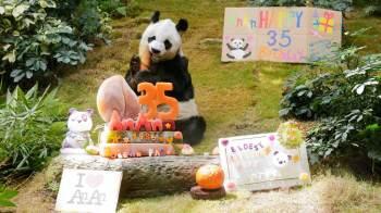 Pandas gigantes na natureza vivem em média cerca de 20 anos, enquanto a expectativa de vida daqueles sob cuidados humanos pode chegar a 30