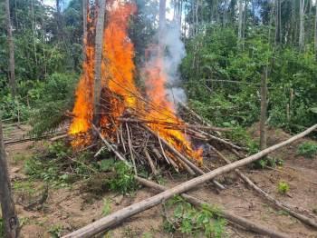 Ao todo, os agentes incineraram cerca de 32 toneladas do material, entre pés, mudas, sementes e plantas já colhidas