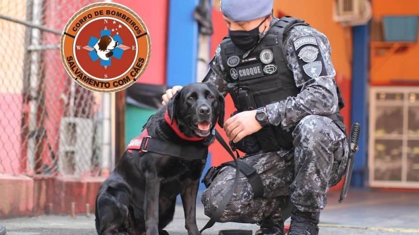 A cadela Sarah trabalho durante cinco anos com os bombeiros em São Paulo