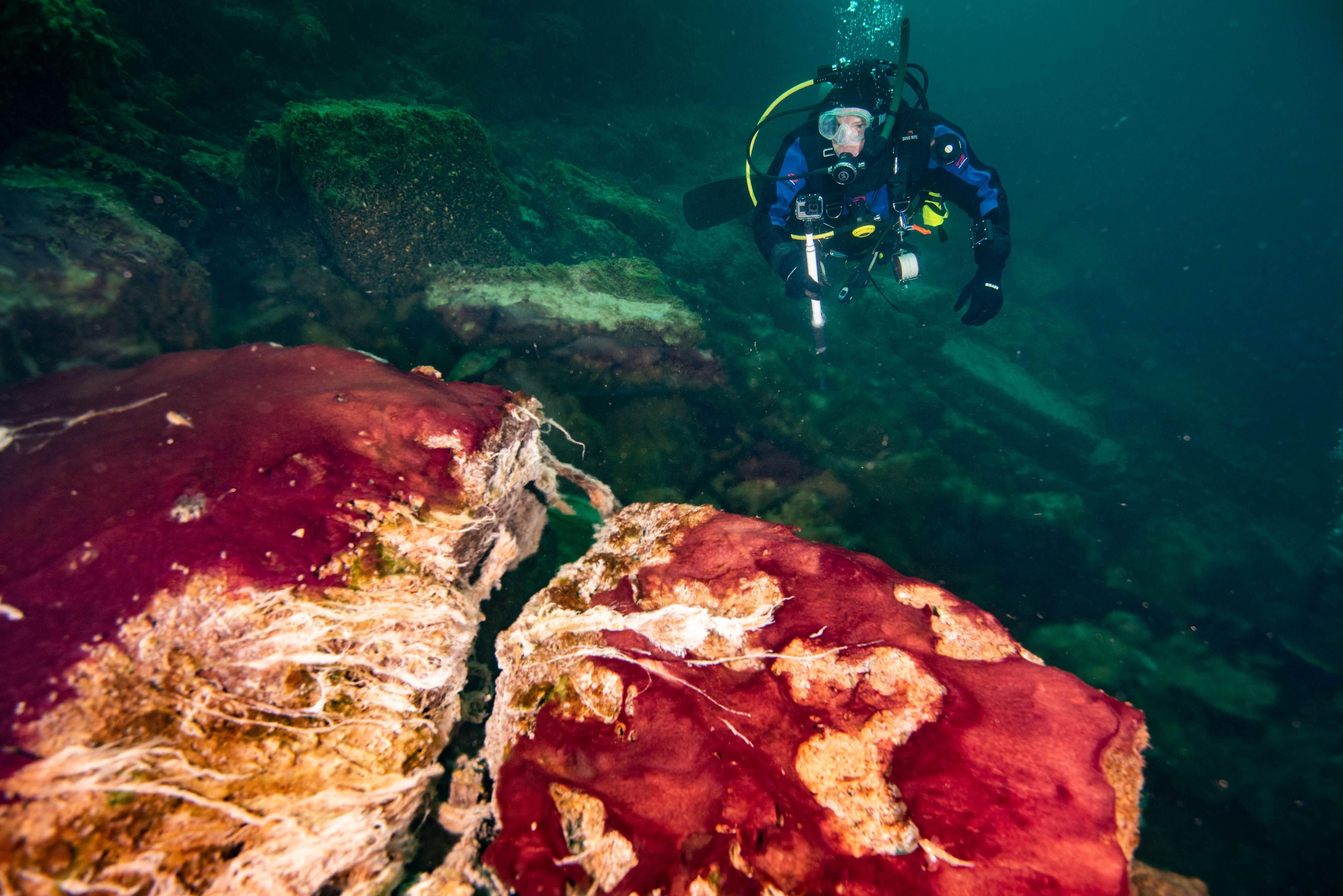 Um mergulhador observa os micróbios no Lago Huron