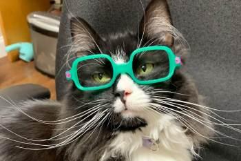 Truffles, agora famosa por seus óculos glamorosos — que variam dos cintilantes roxos ao seu par verde favorito — trabalha ao lado de sua mãe, uma oculista