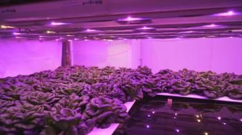 Iniciativas como fazenda vertical são uma opção para produção controlada de alimentos