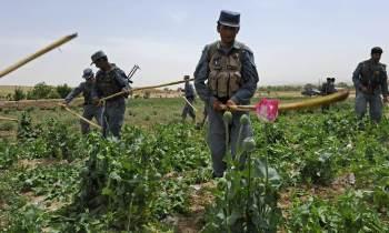 Agência da ONU estima que produção de ópio em 2017, recorde do país, movimentou até US$ 6,6 bilhões; para especialistas, Talibã lucra até US$ 400 milhões ao ano