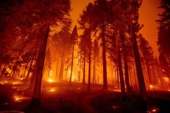 Chamas do Caldor já atingiram 25,3 mil hectares e seguem completamente fora do controle dos bombeiros