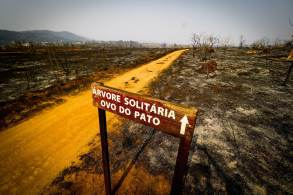 À CNN, o diretor do Instituto de Biociências da USP e membro do IPCC, Marcos Buckeridge, disse que eventos extremos, como queimadas, serão mais frequentes