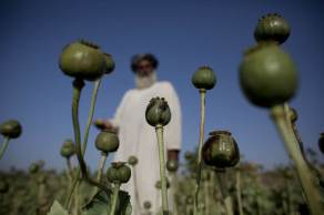 Apesar de obter financiamento da produção de ópio e do tráfico de heroína, Talibã promete erradicar as drogas no Afeganistão