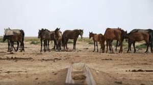 Domesticação de cavalos aconteceu há 4.200 anos, conclui novo estudo