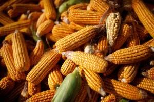 Governo publica MP que zera PIS/Cofins na importação de milho até o fim de 2021