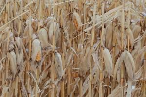 Superávit do agronegócio em setembro é de US$ 8,8 bilhões, alta de 21%