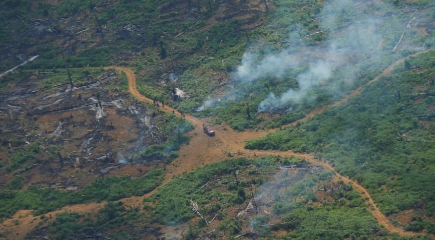 Combate ao desmatamento é um dos itens propostos pelo grupo