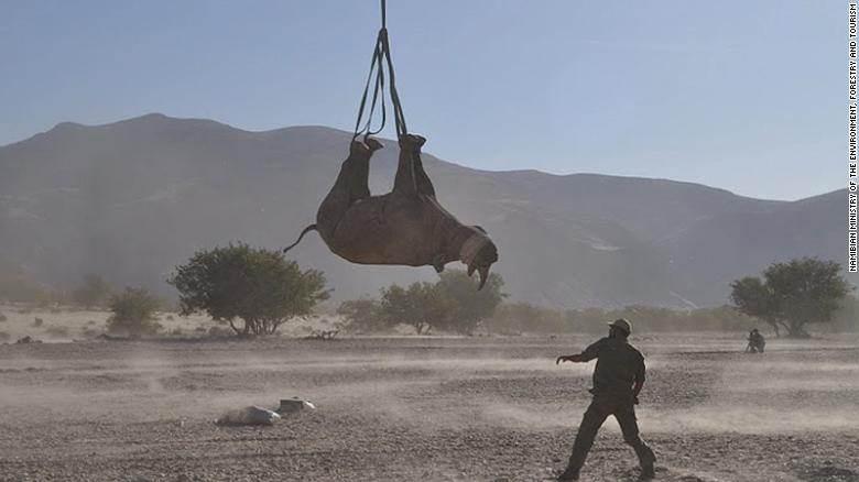 Rinoceronte é transportado de cabeça para baixo na Namíbia