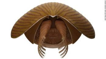 Os Titanokorys mediam até meio metro, mas são considerados verdadeiros gigantes das profundezas diante da época em que viveram