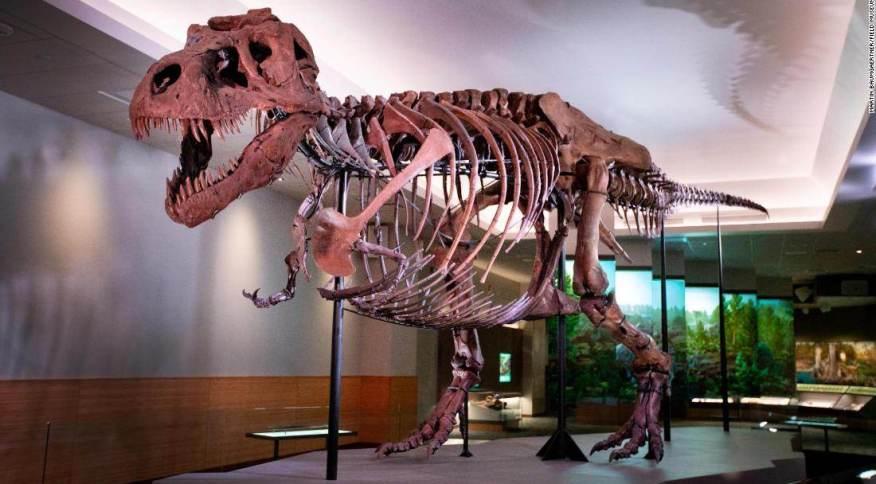 Em exibição no Field Museum, em Chicago, Sue, que é o fóssil de T. Rex mais completo do mundo, mas os cientistas não sabem se trata-se de uma fêmea ou de um macho