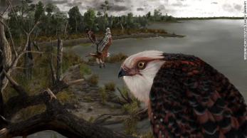 Ave é uma das mais antigas águias de rapina do mundo e foi encontrada em ótimo estado de conservação