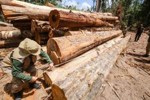 Desmatamento na Amazônia em agosto é o pior em dez anos