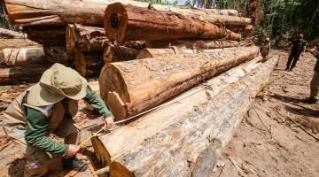 Madeira extraída de forma ilegal apreendida em operação no Pará