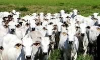 Autoridades do Brasil identificaram dois casos de 'vaca louca' em frigoríficos distintos do país