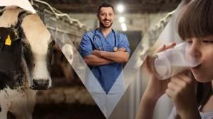 Médico-veterinário – o profissional da Saúde Única