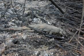 Estudo de pesquisadores de 14 instituições constatou que animais mortos com mais frequência foram grupos de pequenas cobras, pássaros e roedores, além de lagartos, artiodátilos e primatas